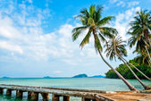 Summer tropical beach with coconut palm trees — Stock fotografie