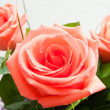 Stock Photo: A bouquet of roses