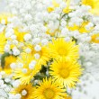Bouquet of yellow chrysanthemums — Stock Photo