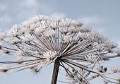 Autumn hoarfrost — Stockfoto