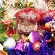 Stock Photo: The British cat Christmas