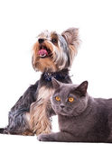 Dog and cat sitting next to — Stock Photo