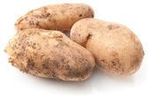 Rauwe aardappel — Stockfoto
