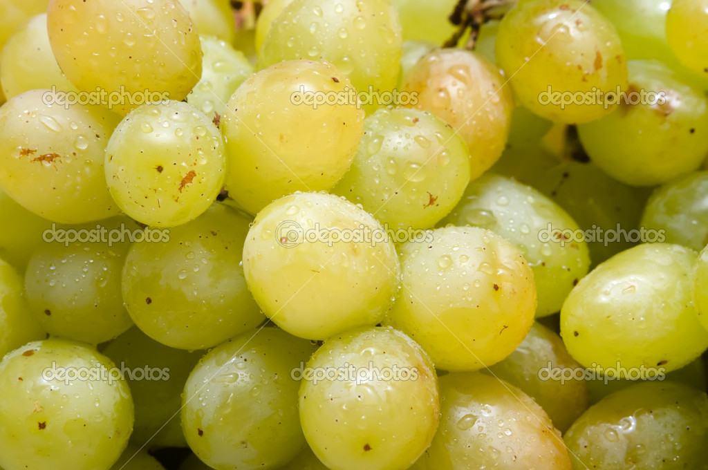 Cluster of ripe green grapes with dew — Stock Photo #12730300