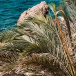 Stock Photo: Palm frond