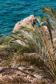 Palm frond — Stock Photo