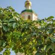 Royalty-Free Stock Photo: Grapes on the background of the church
