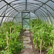 Stock Photo: Arched greenhouse