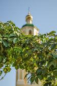 Uvas en el fondo de la iglesia — Foto de Stock