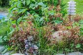 庭のランタン — ストック写真