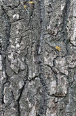 Background bark tree — 图库照片