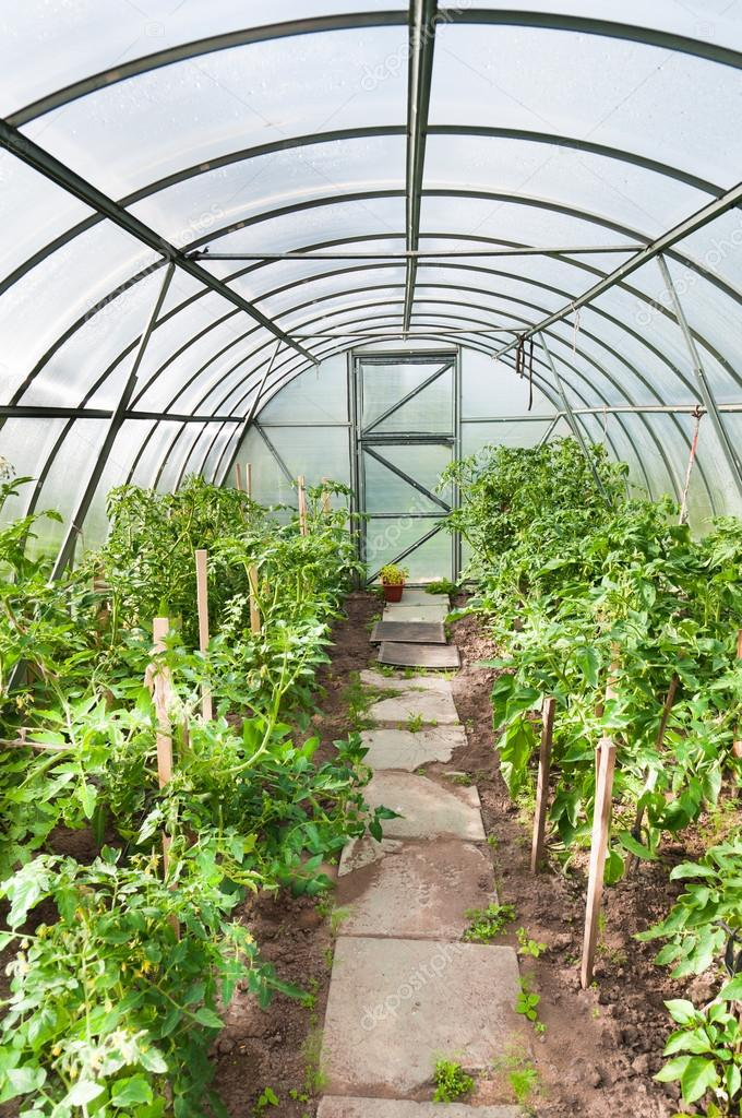 Arched greenhouse with tomato seedlings — Stock Photo #13401056