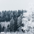 Winter landscape forest - Stock fotografie