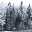 Winter landscape forest - Stockfoto