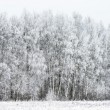 Winter landscape forest — Stockfoto
