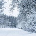 Winter road — Stock Photo #18416275