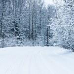 Kış yol — Stok fotoğraf #18469757