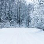 Winter road — Stock Photo #18469757