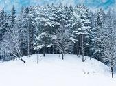 Winter landscape forest — Stock Photo