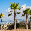 Palm tree landscape — Stock Photo