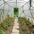 Arched greenhouse — Stock Photo #25886373