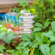 Stock Photo: Lantern in garden