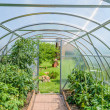 Arched greenhouse — Stock Photo