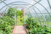 Arched greenhouse — 图库照片