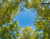 Branch against the sky — Stock Photo