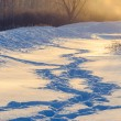 Winter human footprints in the snow at sunrise — Stock Photo #38982687