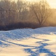 Winter human footprints in the snow at sunrise — Stock Photo #38982709