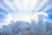 Sun in winter forest trees covered with snow — Foto Stock