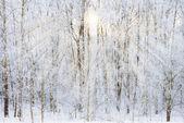Nicht gefrorenen teich im winter — Stockfoto