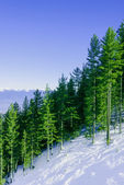 Mountain landscape in sunny winter frosty day with blue clear sk — Foto Stock