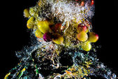 Abstract grapes in water — Stock Photo