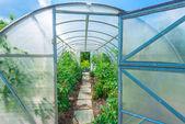 アーチ型の温室 — ストック写真