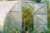 Arched greenhouse — Photo