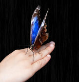 Butterfly On Childs Hand — Stock Photo