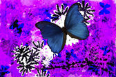 Blue Butterfly Abstract — Stock Photo