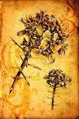 Antieke bloem kunst tekening handgemaakte — Stockfoto