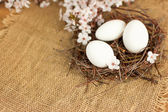 White Easter eggs in a nest with spring flowers — Stockfoto