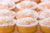 Baked cupcakes with dusting of icing sugar on top. — Stock Photo