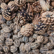 Stock Photo: Dry pine cones