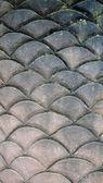 Fish scales — Stock Photo