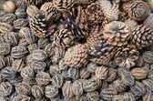 Dry pine cones — Stock Photo
