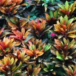 Stock Photo: Leaves arranged
