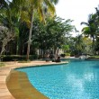 Stock Photo: Coconut tree with Pool