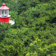 Lighthouse and forest — Stock Photo