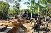 Angkor ruins — Stock Photo