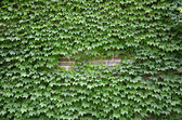 Plants and wall — Stock Photo